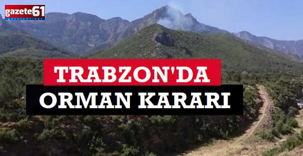 Trabzon'da o ormana giriş yasaklandı