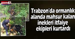 Ormanda mahsur kalan inekleri itfaiye ekipleri kurtardı